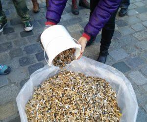 >60.000 Kippen in der Innenstadt aufgesammelt
